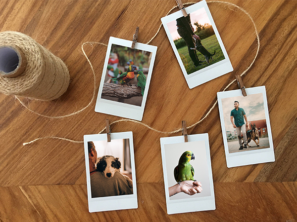 Polaroid-Prints-With-Pet's-Portrait-Or-Painting